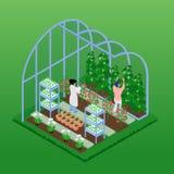 Composición isométrica del invernadero libre illustration