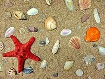 Composición marina Imágenes de archivo libres de regalías