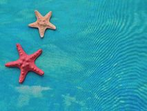 Composición marina de la materia textil con las estrellas de mar Imagenes de archivo