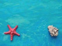 Composición marina de la materia textil con las estrellas de mar y la cáscara Fotos de archivo libres de regalías