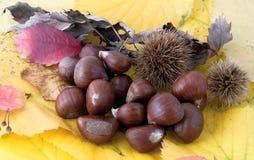 Composición otoñal de la fruta, castañas Fotografía de archivo libre de regalías