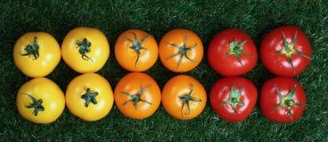 Composición panorámica de tomates amarillos y anaranjados rojos imágenes de archivo libres de regalías