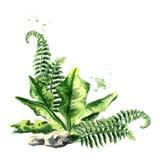 Composición prehistórica de las plantas Ejemplo dibujado mano de la acuarela, aislado en el fondo blanco
