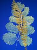 Composición presionada de las plantas Imagen de archivo libre de regalías