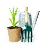 Composición que cultiva un huerto con la planta verde en el pote y los utensilios de jardinería de la turba Foto de archivo libre de regalías
