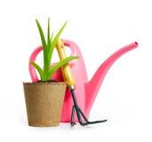 Composición que cultiva un huerto con la regadera y la planta verde en el p Imagen de archivo libre de regalías