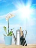 Composición que cultiva un huerto con una flor y una regadera Imagen de archivo libre de regalías