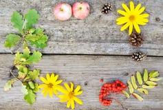 Composición redonda brillante de flores, serbal, conos y bellotas y manzanas amarillos en fondo de madera rústico en otoño Closup imagen de archivo libre de regalías