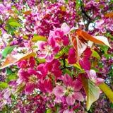 Composición roja y rosada de las flores Imagenes de archivo