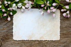Composición romántica con las flores de la manzana Fondo para saludar Fotografía de archivo
