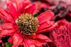 Composición seca de la flor Imagenes de archivo