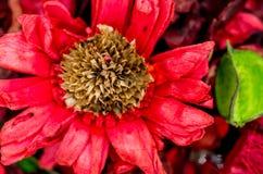 Composición seca de la flor Imágenes de archivo libres de regalías