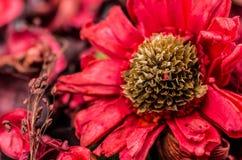 Composición seca de la flor Fotografía de archivo
