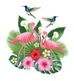 Composición tropical con los colibríes y los flamencos Ilustración del vector Fotos de archivo