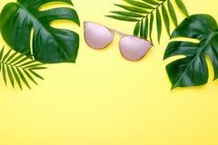 Composición tropical Monstera del verano y palma en fondo rosado un espacio para el texto Visión superior, endecha plana, fotos de archivo libres de regalías
