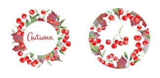 Composición y guirnalda redondas de bayas del viburnum Conveniente para las tarjetas, invitaciones Stock de ilustración