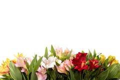 Composici?n de la flor en el fondo blanco con el copyspace imágenes de archivo libres de regalías