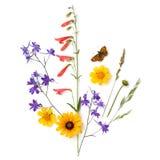 Composici?n de plantas y de flores en un fondo blanco Prado fotografía de archivo