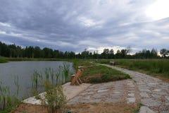 Composici?n de Reed Natural del cielo de Forest Lake Evening fotos de archivo libres de regalías