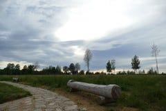Composici?n de Reed Natural del cielo de Forest Lake Evening foto de archivo