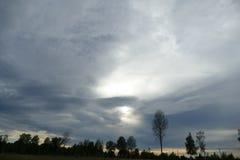 Composici?n de Reed Natural del cielo de Forest Lake Evening imagenes de archivo