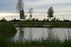 Composici?n de Reed Natural del cielo de Forest Lake Evening imágenes de archivo libres de regalías