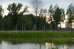 Composici?n de Reed Natural del cielo de Forest Lake Evening fotografía de archivo