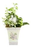 Composición con las flores y las plantas Fotografía de archivo