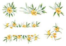 Composiciones decorativas de ramas de espino amarillo Stock de ilustración