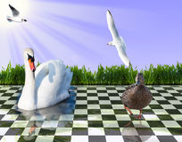 Composing Waterfowl. A Composing of some Waterfowl Royalty Free Stock Photos