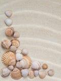 Composição das conchas do mar Imagens de Stock