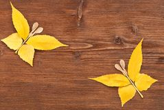 Composite of autumn leaves Royalty Free Stock Photo