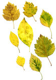 Composite of autumn leaves Stock Photography