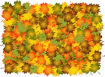 Composite of autumn  leaves Stock Image