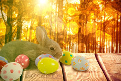 Composite image of brown bunny with colorful easter egg Royalty Free Stock Photography