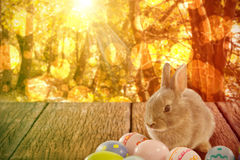Composite image of bunny with patterned easter eggs Stock Images
