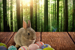 Composite image of bunny with patterned easter eggs Royalty Free Stock Image