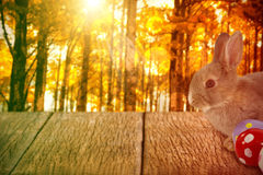 Composite image of bunny with polka dot easter eggs Stock Images