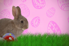 Composite image of bunny with polka dot easter eggs Stock Photo