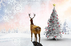 Composite image of christmas tree and reindeer Stock Photography