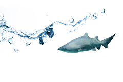 Composite image of close up on blue sparkling water. Close up on blue sparkling water against shark swimming in fish tank Royalty Free Stock Photography