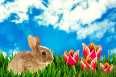 Composite image of close-up of brown bunny Royalty Free Stock Photo