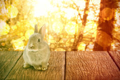 Composite image of close-up of easter bunny Stock Photography