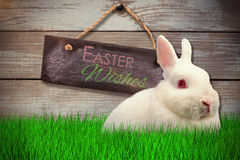 Composite image of close up portrait of cute rabbit. Close up portrait of cute rabbit  against wood Stock Photos