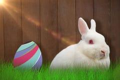 Composite image of close up portrait of cute rabbit Stock Photo
