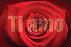 Composite image of close up of red rose Stock Photo