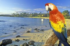Composite image of a colorful parrot and coastline in Hawaii Stock Photography