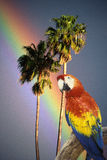 Composite image of a colorful parrot, palm trees and rainbow in Hawaii Royalty Free Stock Photo