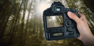 Composite image of cropped hand of photographer holding camera. Cropped hand of photographer holding camera  against low angle view of trees in woodland Stock Images