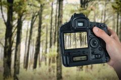 Composite image of cropped hand of photographer holding camera. Cropped hand of photographer holding camera  against view of a forest in the mist Stock Photos